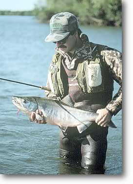 "Dan says ""Wow"" These chum salmon are great! Click to read the article."